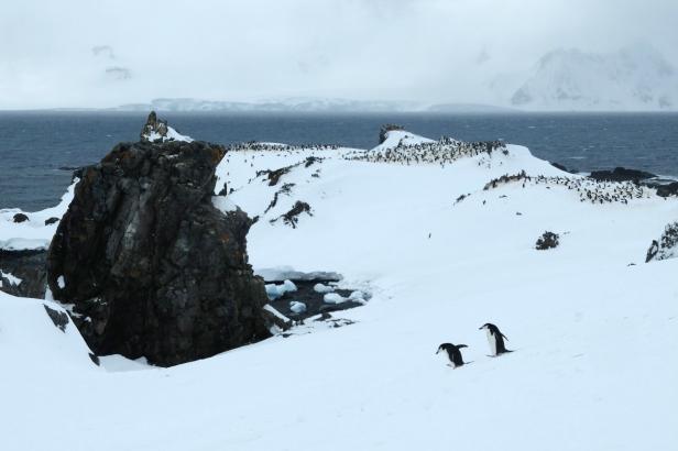 Antarctica9
