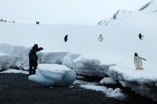 Antarctica Yankee harbour