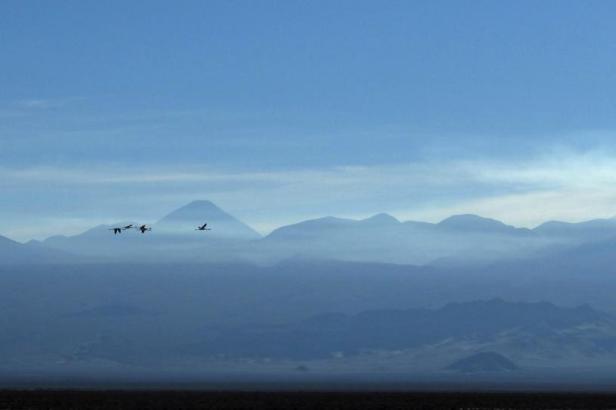 Latinamerikaliv: Laguna Chaxa Atacama Chile