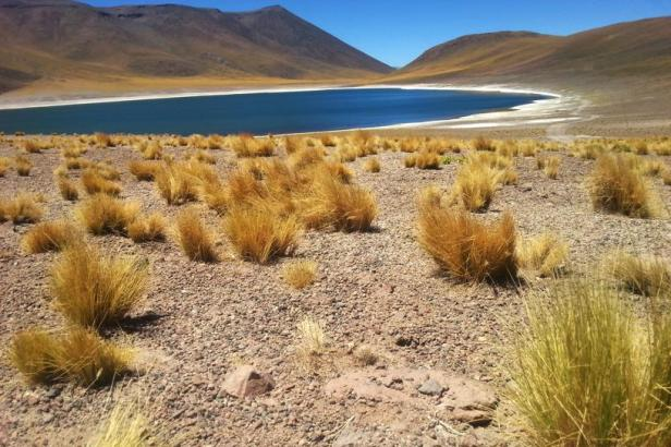 Latinamerikaliv: Altiplanic lagoons Atacama Chile