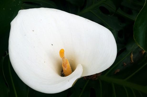 Jardin botánico Bogotá_Latinamerikaliv 3