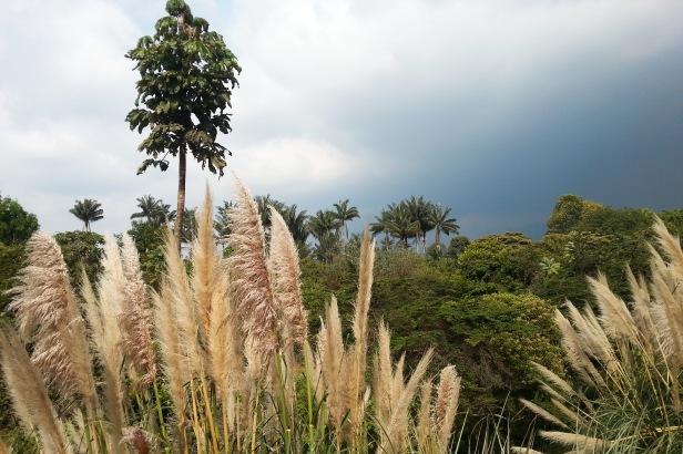 Jardin botánico Bogotá_Latinamerikaliv 6