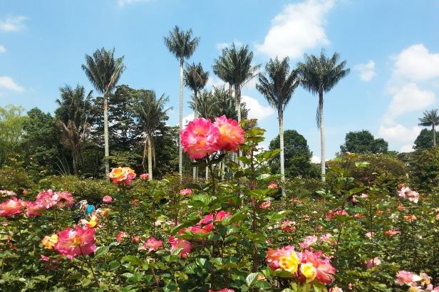 Jardin botánico Bogotá_Latinamerikaliv