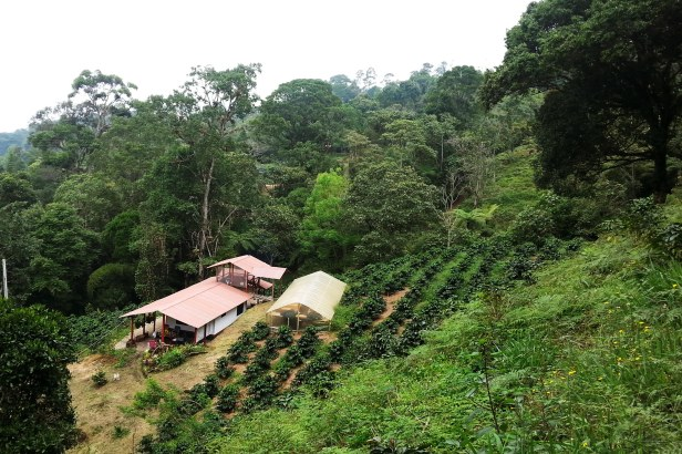 Colombian Coffee Farm_Latinamerikaliv 11