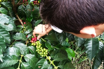 Colombian Coffee Farm_Latinamerikaliv 2