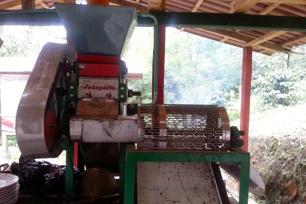 Colombian Coffee Farm_Latinamerikaliv 5