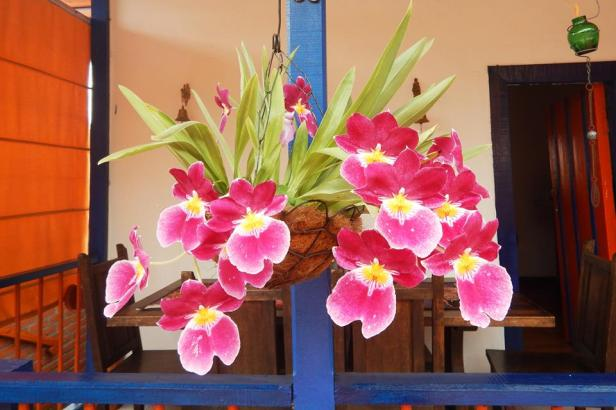 latinamerikaliv_salento_14_flowers