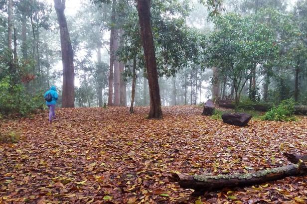 58-quinini-oak-wood