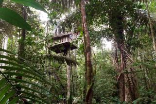 Latinamerikaliv_Amazonas_Tree house_1