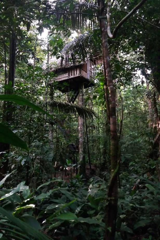 Latinamerikaliv_Amazonas_Tree house_6